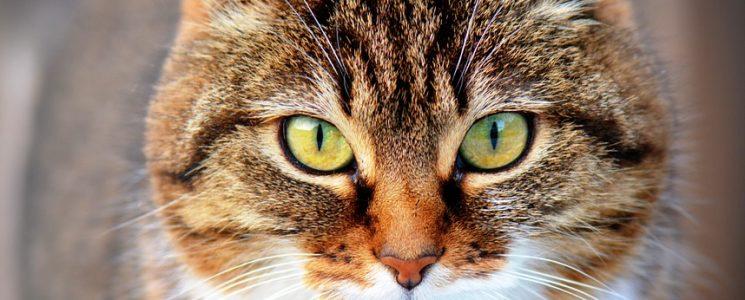 los-poderes-secretos-de-los-gatos