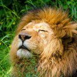 Compatibilidad de Leo con Otros Signos del Zodiaco